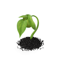 Plant Sprout.G15.2k